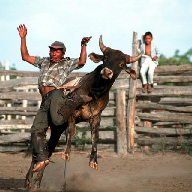 Rupununi Rodeo